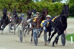 Standard Bred Horse Racing